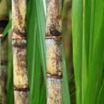 Китай увеличивает импортные пошлины на сахар