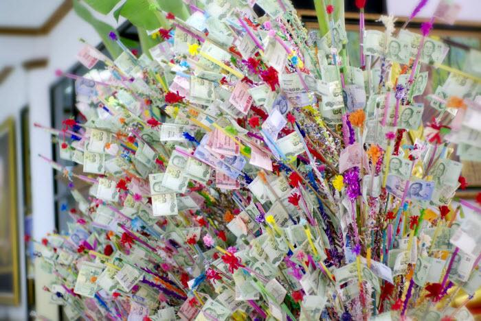 денежное дерево в Таиланде